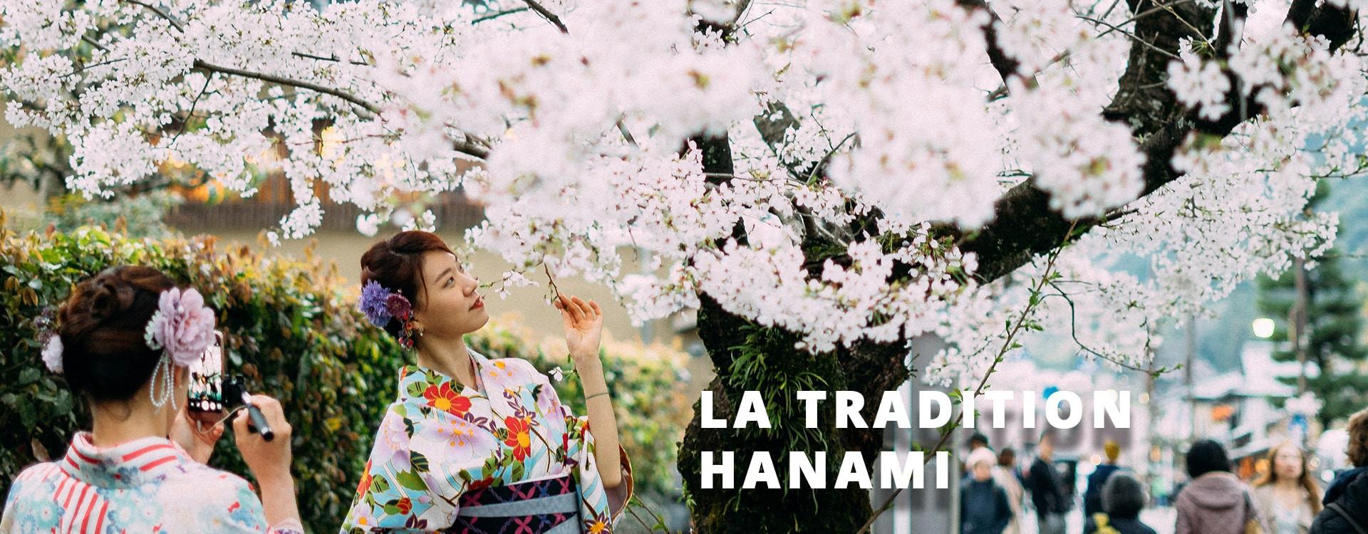 Le calendrier de la floraison des cerisiers au Japon
