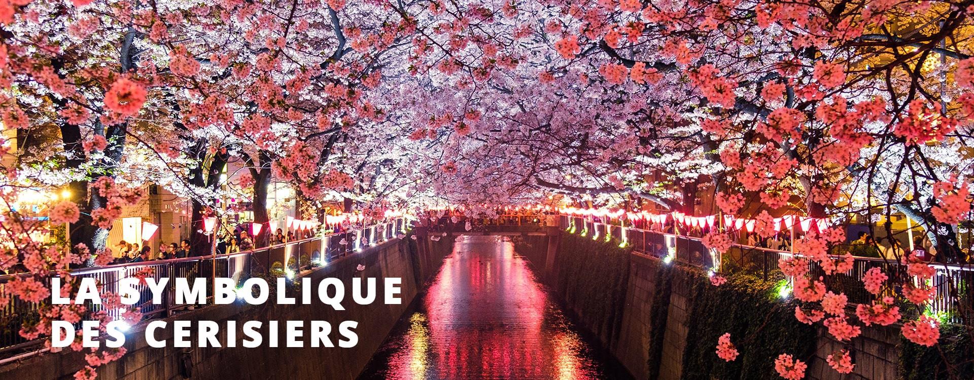 La symbolique des fleurs de cerisiers au Japon